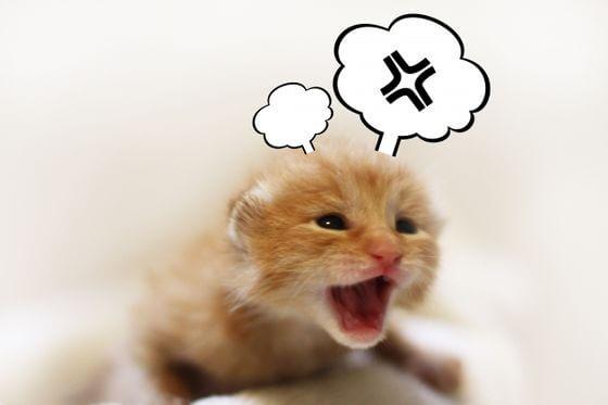 猫の便秘 治し方
