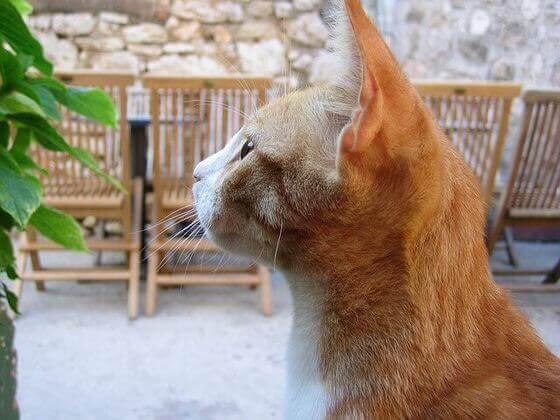 アイリスオーヤマ 猫トイレ 口コミ