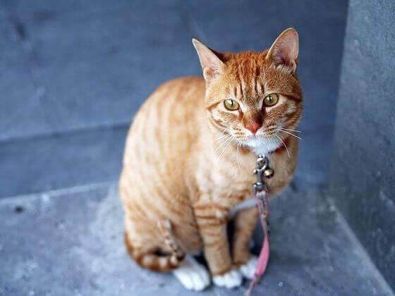 猫用こたつ 楽天 ドギーマン