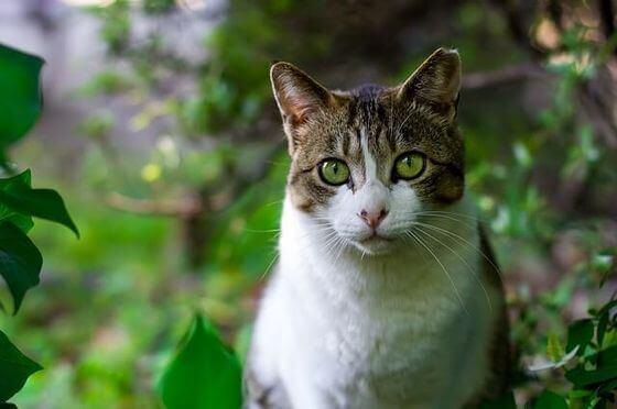 猫 尿路疾患