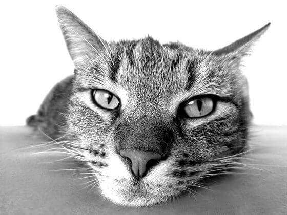 おすすめ 猫グッズ