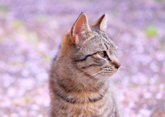 ペット保険 猫 必要