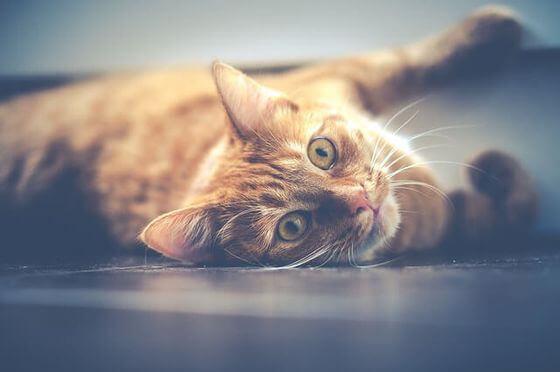 猫 フラップドア